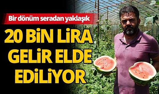 Antalya'daki seralarda karpuz hasadı başladı