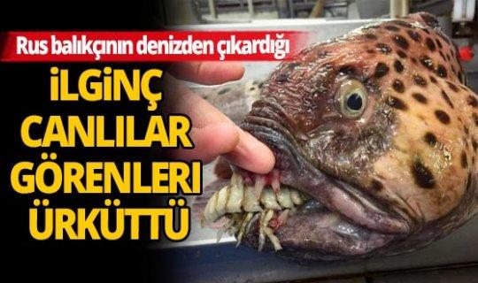 Bu canlılar dünyaya ait olamazlar!