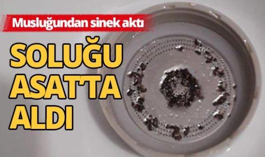 Temizlemek için söktüğü musluk filtresinde yüzlerce sinek çıktı!