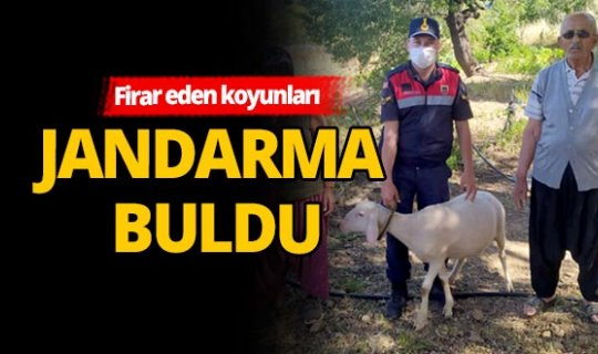 Vatandaşın kayıp koyunlarını jandarma buldu