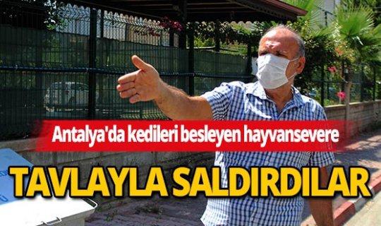 Antalya'da kedileri besleyen hayvansevere tavlalı saldırı iddiası