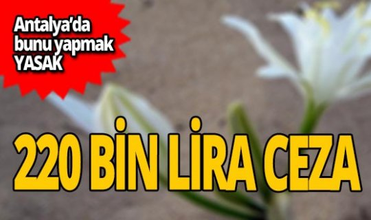 Antalya'da bunu yapana 220 bin lira ceza