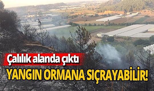 Antalya haber: Ormana sıçrayabilir!