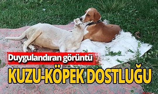 Antalya haber: Kuzu-köpek dostluğu