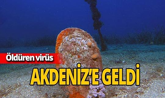 Öldüren virüs Akdeniz'e geldi