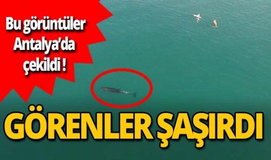 Antalya haber: Bir anda yanlarında belirdi, görenler şaştı kaldı