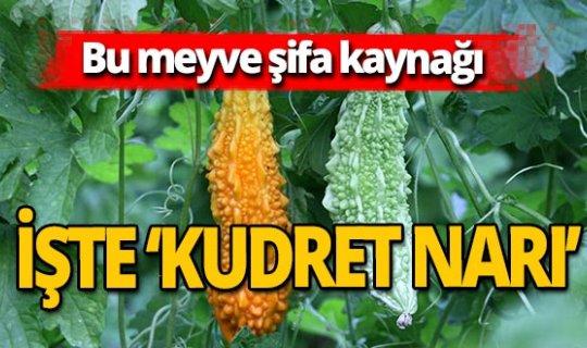 Antalya haber: 'Kudret Narı'yla hastalığını yendi, şimdi kendisi üretiyor