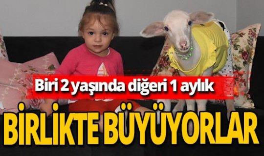 Beril'in en yakın arkadaşı: 'Topitop' kuzu