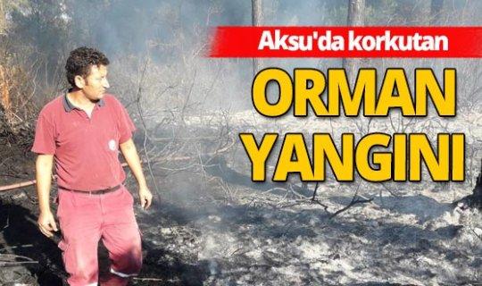 Aksu'da korkutan orman yangını