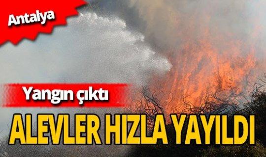 Antalya'da yangın: 5 dekar alan zarar gördü