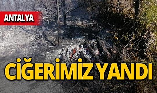Manavgat'ta orman yangınında 15 dönüm alan zarar gördü