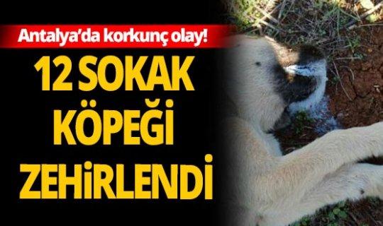 Antalya'da korkunç olay! Vicdansızlar zehirleyerek öldürdüler