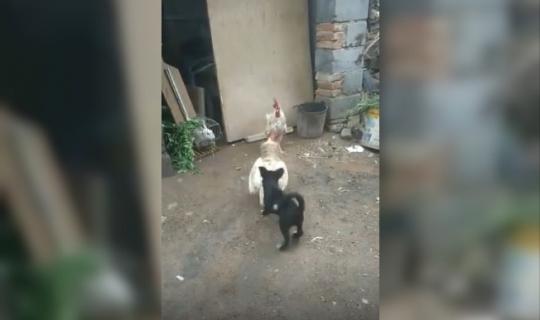Alanya'da yavru köpeğin barış mücadelesi paylaşma rekorları kırdı!