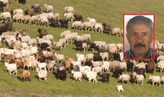Antalya'da koyunlarını otlatmak isterken canından oldu