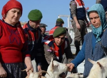 Hayvanlar sahiplerine teslim edildi