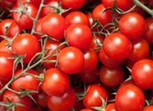Rusya'dan domates ile ilgili güzel haber