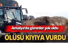 Antalya'da ölüsü kıyıya vurdu