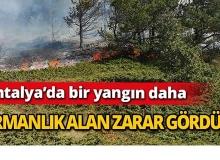 Antalya'da bir yangın daha