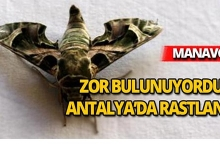Zor bulunuyordu, Antalya'da rastlandı