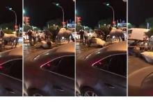 Antalya'da atlara fayton işkencesi devam ediyor