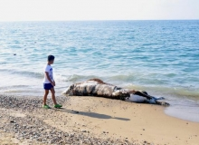 Manavgat'ta denizden çıkanı görenler şoke oldu