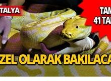 Antalya'da tam 41 tane dünyaya geldi!