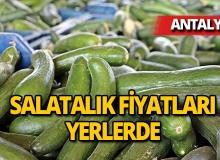 Antalya'nın 'Kasım' sıcağı, salatalık fiyatını 4 kat dibe çekti