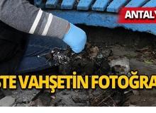 Antalya'da yakarak öldürdüler!