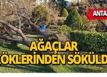 Fırtına Antalya'da dev ağaçları yerle bir etti!