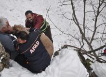 AFAD, bu kez hasta dağ keçisi için seferber oldu