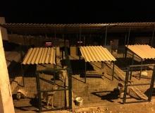 Mardin'de hayvan barınaklarına ısıtıcılar konuldu