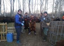 Sağlıklı insan için sağlıklı hayvan projesi