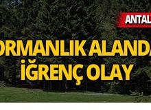 Antalya'da ormanlık alanda iğrenç olay!
