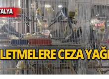 Antalya'da o hayvanlara el konuldu!