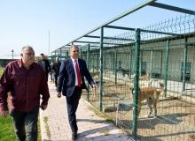 Başkan Uysal barınakta incelemede bulundu