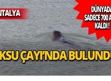 Antalya'da bulundu: Dünyada sadece 700 tane var!