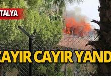 Antalya'da alevler her yeri sardı!