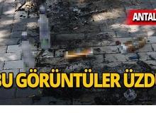 Antalya'da önce alkol aldılar, sonra zarar verdiler!