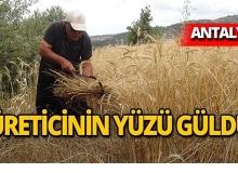 Antalya'da yılın ilk buğday hasadı yapıldı