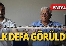 Antalya'da görüldü, büyük korku yarattı