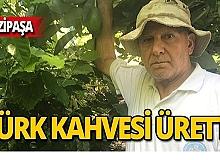 Kahve ağacından Türk kahvesi üretti