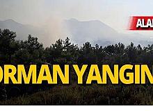 8 dönümlük arazi alev alev yandı!