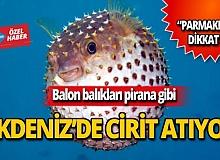 Akdeniz'de cirit atıyorlar!