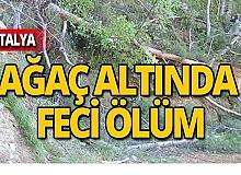 Oğlunun kestiği ağaç başına devrildi