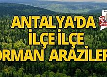 Antalya'da ilçe ilçe orman arazileri