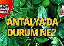 Antalya'nın ıspanakları zehirli mi?