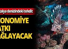 Balon balığı ekonomiye katkı sağlayacak