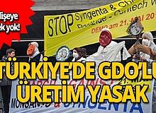 Türkiye'de GDO'lu üretim yasak