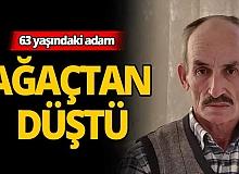 Antalya'da 63 yaşındaki adam ağaçtan düştü