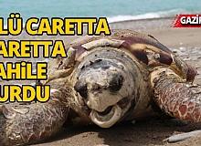 Antalya sahiline ölü caretta caretta vurdu